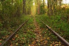 Le vieux chemin de fer par le tunnel célèbre de forêt d'automne de l'amour a formé par des arbres Klevan, obl de Rivnenska l'ukra Images stock