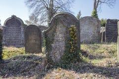 Le vieux cimetière juif dans la ville de Horice est très grand et bien conservé Image stock