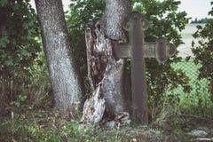 Le vieux cimetière oublié, croix s'est enraciné dans des arbres photo libre de droits
