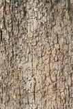 Le vieux fragment d'écorce d'arbre Images libres de droits