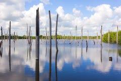 Le vieux lac Photographie stock