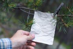 Le vieux message sur une branche dans la forêt Images libres de droits