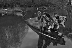 Le vieux morceau d'arbre a submergé dans l'eau noire et blanche Photographie stock