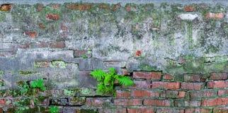 Le vieux mur de briques plante la texture grunge Photographie stock libre de droits