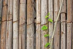 Le vieux mur en bambou brun images stock