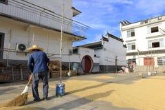 Le vieux nettoyage rural d'agriculteur a rectifié pour le grain de séchage, l'adobe RVB images libres de droits