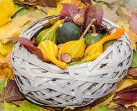 Le vieux panier de paille rempli de potirons de bébé l'automne a coloré des feuilles Photographie stock libre de droits