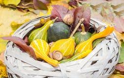 Le vieux panier de paille rempli de potirons de bébé l'automne a coloré des feuilles Images libres de droits