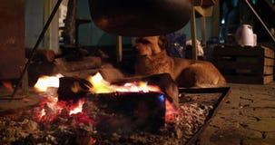 Le vieux petit chien chauffe autour du feu banque de vidéos