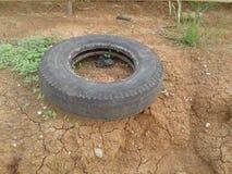 Le vieux pneu dans le jardin deux ans disparaissent image stock