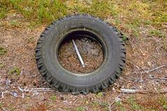 Le vieux pneu jeté dans les bois images stock