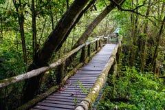 Le vieux pont en bois dans la forêt à feuilles persistantes Photographie stock libre de droits