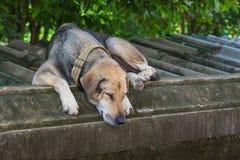 Le vieux sommeil de chien sur le mur Images libres de droits
