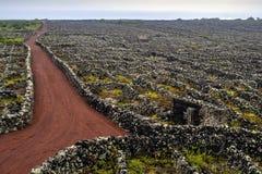 Le vigne con le pareti del ` s della lava sull'isola di Pico hanno elencato sulla lista protetta dell'Unesco immagini stock libere da diritti