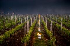 Le vigne del Bordeaux colpite da un gelo devastante immagini stock
