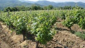 Le vigne di Demir Kapija, Macedonia immagini stock