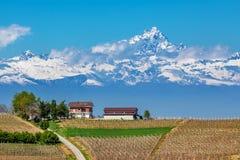 Le vigne e Monviso alzano nel Piemonte, Italia. Fotografia Stock Libera da Diritti