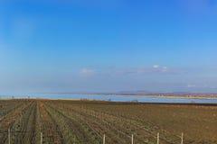 Le vigne sulla penisola di Taman nell'inverno Fotografia Stock
