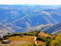 Le vigne a terrazze formano i pendii di collina del ` la s il Duero River Valley del Portogallo immagine stock libera da diritti