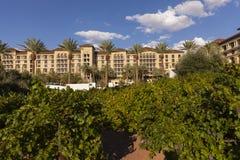 Le vignoble à la station de vacances de ranch de vallée verte et station thermale à Las Vegas, Photos stock