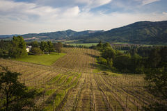 Vignobles de ressort, vallée de Willamette, Orégon photos libres de droits