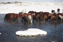 le village couvert de neige, cheval noir boit l'eau de la rivière Photo stock