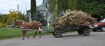 Le village du ` s de Firman court un buisson à quatre roues avec le cornfl riche en maïs Photographie stock libre de droits