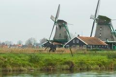 Le village néerlandais traditionnel avec de vieux moulins à vent et la rivière aménagent en parc Photos libres de droits