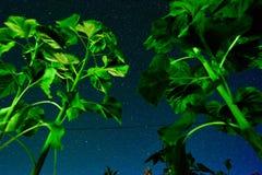 Le village, une vue de dessous au ciel étoilé de nuit, par les tiges d'un tournesol photos stock