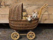 Le vintage a bourré l'ours de nounours, le chien de terrier de renard et le chat dans le chariot en osier de poupée Image libre de droits