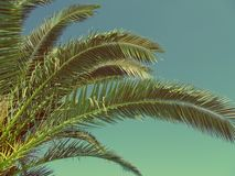 Le vintage de palmettes a modifié la tonalité la photo Fond tropical, copie photographie stock libre de droits
