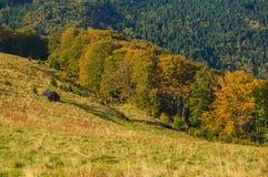 Le vintage a ruiné le chapeau dans les montagnes dans le beau paysage Photographie stock libre de droits