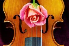 Le violon et s'est levé closeup Photos stock