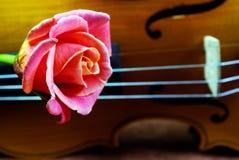Le violon et s'est levé closeup Photographie stock libre de droits
