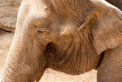 Le visage de l'éléphant photo stock