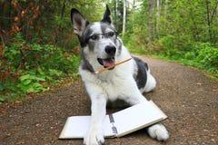 Le visage drôle a étonné le chien avec un crayon se laissant tomber de sa bouche Images libres de droits