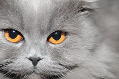 Le visage du chat Photo stock