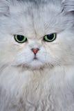 Le visage du chat photo stock