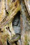 Le visage en pierre caché, angkor Photographie stock libre de droits