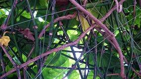 Le viti e le piante assottigliano i gambi sulla griglia Immagini Stock