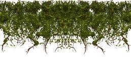 Le viti hanno isolato la struttura bianca   Immagini Stock