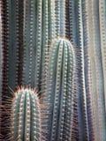 Le voisinage de cactus images stock