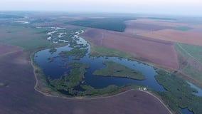 Le vol aérien de bourdon au-dessus d'un bel étang a rempli de végétation banque de vidéos