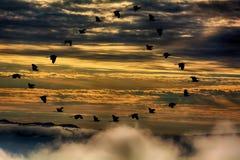 Le vol de héron des masses de Siluate sont symbole de coeur Images libres de droits