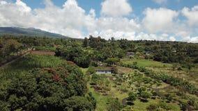 Le volcan incline grande île Hawaï banque de vidéos