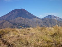 Le volcan lonquimay dans des araucarias de las se garent en piment Images libres de droits