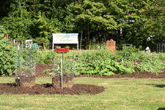 Le volontaire travaille dans le jardin de la Communauté Image stock