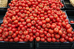 le volume de tomates Photos libres de droits
