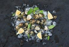 Le vongole crude fresche con il limone, le erbe e le spezie sullo scheggiato su ghiacciano il contesto scuro della pietra dell'ar immagine stock libera da diritti