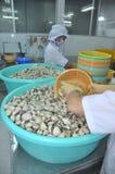Le vongole stanno lavare ed imballande in un impianto di lavorazione in Tien Giang, una provincia dei frutti di mare nel delta de Fotografia Stock Libera da Diritti